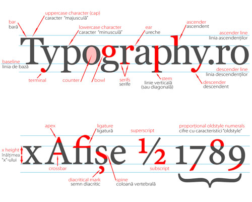 typography quiz i